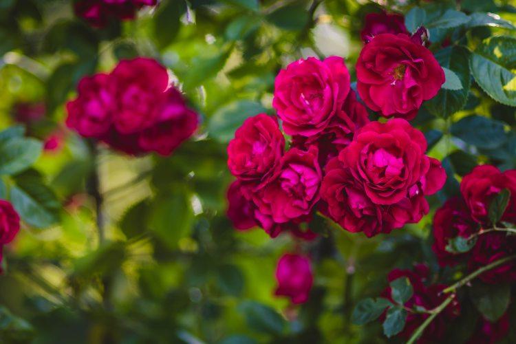 beautiful-bloom-blooming-1251397.jpg