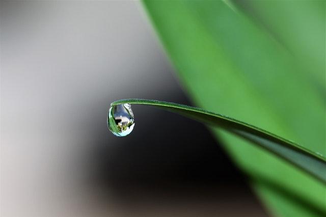 blade-of-grass-blur-bright-close-up-432786